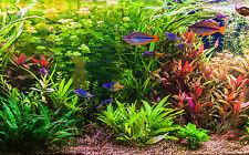 Aquarium-Pflanzenset 'Regenbogen' bis 60L
