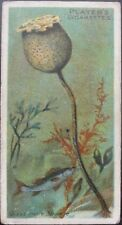 Single: No.46 GLASS ROPE SPONGE - WONDERS OF THE DEEP - Player 1904