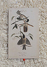 Cardstock---6 cm  Wide  x  10 cm High--Vintage Style  (3)