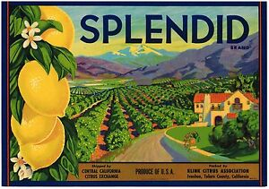 ORIGINAL 30's SPLENDID CRATE LABEL VINTAGE BUNGALOW ORCHARD CALIFORNIA LANDSCAPE
