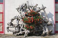 Fioriera in legno da esterno scultura radice indonesiana giardino stile antico