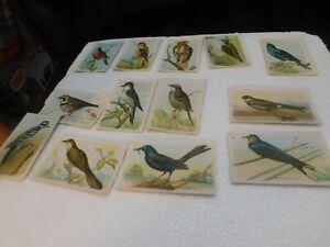 50+ Vintage Trading Card Lot Useful Birds of America Arm & Hammer Church Dwight