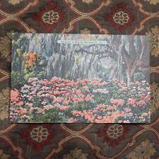 Vintage Postcard Azaleas In Bloom, Savannah, Ga.
