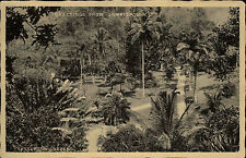Jamaica British West Indies Karibik AK ~1920/30  Partie in Castleton Gardens
