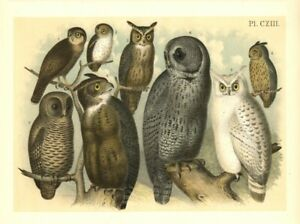HAWK OWL SPARROW OWL GRAY OWL ARCTIC WESTERN HORNED OWL BARRED OWL SPOTTED OWL