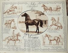 HORSE BREED CHART MORGAN IN PORTRAIT AND ACTION by SAM SAVITT