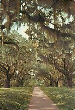 Brookgreen Gardens Murrels Inlet South Carolina SC Oaks Spanish Moss Postcard