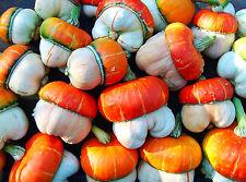 Calabaza Ornamental-turco turbante - 5 semillas-Cucurbita Maxima-Escalador de anual