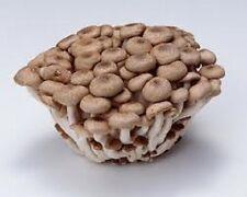 Portobello concentrated seeds mushroom spores for 10 liter of liquid mycelium