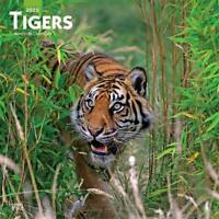 Tigers 2020 - 16-Month Square Wall Calendar