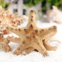 2/10Pcs Natural Starfish Sea Star Shell DIY Crafts Tank Aquarium Decor Oarnments