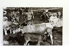 1309 CPSM 12 AVEYRON   AUBRAC  FRANCE POSTCARD PHOTO VERITABLE