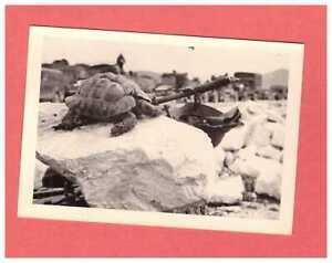 Original Foto Wehrmacht in Griechenland Schildkröte und Stahlhelm funbild