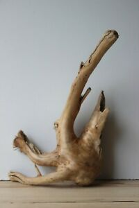 Treibholz Schwemmholz  Driftwood 1 XL  Wurzel Terrarium Dekoration 44 cm
