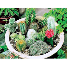 100 pcs Mix Cactus Seeds Rare Succulents Green Plant for Home Garden Decoration