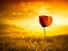 NATURE FLOWER POPPY RED MEADOW SKY GOLD POSTER ART PRINT HOME PICTURE BB1380A