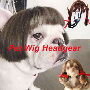 Pet Wig Headgear Cosplay Props Dog Cat Cross-Dressing Photography Funny Props~