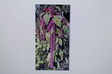 10 Semillas Amaranto Colgante, Amaranthus caudatus, # 147