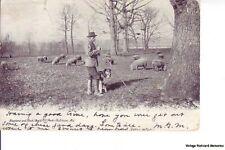 BALTIMORE MD 1905 Shepherd & Flock Arvid Hill Park GEM+