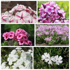 100Pc Phlox Flower Seeds 10 Kinds Decorative Beautiful Fragrant Perennial Plants