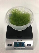 Chaetomorpha Macro Algae 1 Oz / 2 cups Chaeto Refugium Live Copepods Amphipods