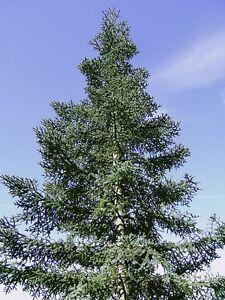 UNBELIEVABLE OFFER 12 VARIETIES  TREE SEEDS - 300 SEEDS
