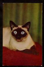 1962 vintage chrome wide eyed siamese cat postcard