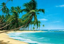 Foto Wallpaper Palmas en la playa Mural de Pared 366x254cm playa y el océano azul