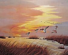 Mallards by John Akers (Signed & Numbered)