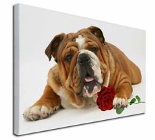 More details for red bulldog with red rose x-large 30