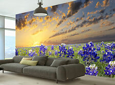 Bluebonnets in the Texas Wall Mural Photo Wallpaper GIANT DECOR Paper Poster