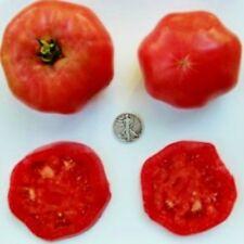 African Queen - Beautiful Beefsteak - 40 Seeds - Buy any 3 varieties get 1 free!