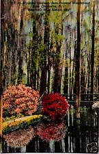 Postcard SC South Carolina Charleston Cypress Gardens Nr Mint Linen