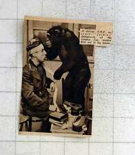 1939 Arp Recruit Jackie The Chimpanzee Rendering First-aid