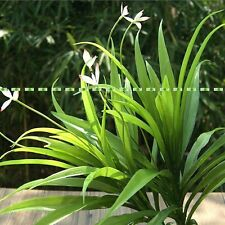 26 Leaf 34cm Artificial Orchid Evergreen Plant Tree Wedding Home Decor Green
