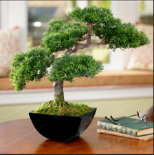 Japanese Mini Ornamental Pine Osaka 50 PCS Seeds Bonsai Plants Pine Tree Garden