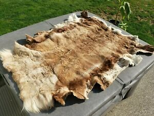 Alaskan Caribou hide, hair on, full fur pelt