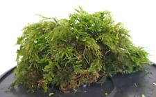 Java Moss Carpet Plant Aquarium Plants Tropical Fish Tank Fry Hide Bogwood