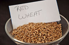 20 Pounds Hard Red Winter Wheat Berries Fodder Wheatgrass Flour Free Shipping