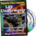 Underwater Life-HD RoyaltyFree Stock Footage,Commercial