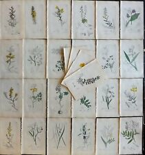 Sowerby 1846 Lot 28 Hand Col Botanical Prints. Flowering Plants. Book Plates
