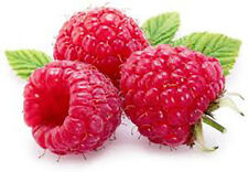 Food Flavouring - FOOD FLAVOR POWDER CAKES DRINKS -  Raspberry
