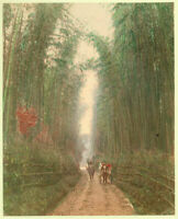 Giappone Bambù vicino Kyoto Foto originale colorata a mano Tamamura 1890ca XL380