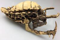Predator Movie Heavy Resin Skull Prop Finished Replica Model Bust Casting