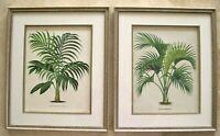 2 Antique Palm Tree Prints: J. Linden: Pannemaker: Brussels, 1856: