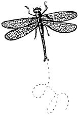 Mounted Rubber Stamps, Flying Dragonfly, Dragonflies, Dragonfly Stamps, Nature