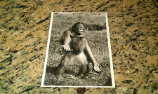Nigel Hillier Orangutan Orang Utan Monkey Art Unlimited Amsterdam New Postcard