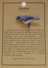 Bluebird Bird Hat Pin Hat Lapel Pins -Songbird