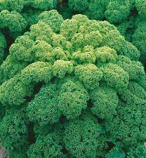 Cabbage seed Leaf Green Ukraine Heirloom Vegetable Seeds. 120 SEEDS