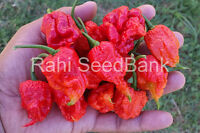 Carolina Reaper Pure Strain World's Hottest Chilli - 5 Australian Grown Seeds